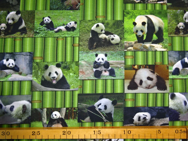Bb Naehshop De Jersey Digitaldruck Pandas Bambus